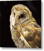 Barn Owl In A Dark Tree Metal Print
