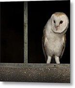 Barn Owl In Window Metal Print
