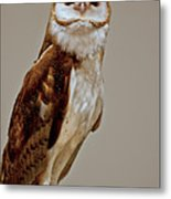 Barn Owl Of Michigan Metal Print