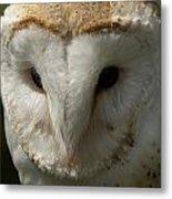 Barn Owl Portrait Metal Print