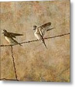 Barn Swallows On Barbed Wire Fence Metal Print