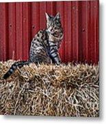 Barnyard Cat Metal Print