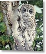 Barred Owl II Metal Print