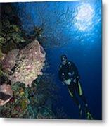Barrel Sponge And Diver, Belize Metal Print