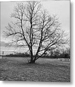 Barren Tree On A Winters Day Metal Print