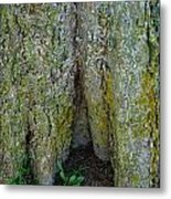 Base Of The Tree View Metal Print