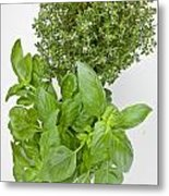 Basil And Thyme Metal Print by Joana Kruse