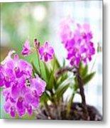 Basket Of Orchids Metal Print