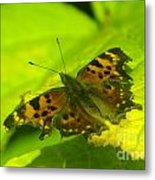 Basking Butterfly  Metal Print