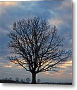 Basking In The Pink And Blue Sky Metal Print