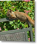 Basking Squirrel Metal Print