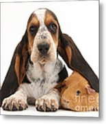 Basset Hound And Guinea Pig Metal Print