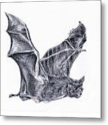 Bat Metal Print by Lucy D