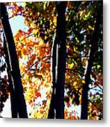 Bathed In Sunlight Metal Print