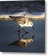 Beach Bird Metal Print