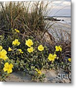 Beach Evening Primrose On Folly Beach - D001782 Metal Print