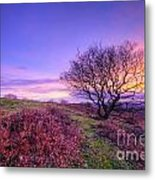 Beacon Hill Sunrise 1.0 Metal Print