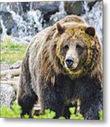 Bear On The Prowl. Metal Print
