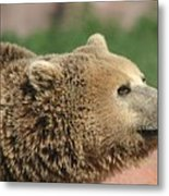 Bear Profile Metal Print
