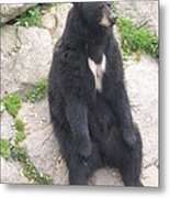 Bear Sitting On A Rock Metal Print