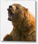 Bear With Tongue Out Of Mouth Metal Print by Carson Ganci