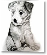 Bearded Collie Pup Metal Print by Michelle Harrington