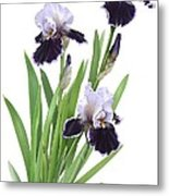 Bearded Iris Trio Metal Print