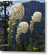 Beargrass Squaw Grass - 4 Metal Print