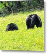 Bears In A Peaceful Meadow1 Metal Print