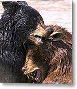 Bears In Water Metal Print