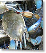 Beaufort Blue Crabs Metal Print
