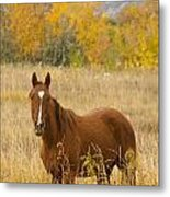 Beautiful Chestnut Horse Metal Print