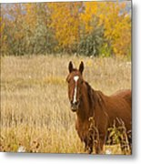 Beautiful Grazing Horse Metal Print