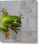 Beautiful American Green Tree Frog On Grunge Background  Metal Print