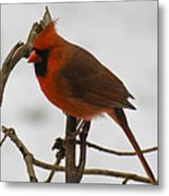 Beautiful Cardinal Metal Print