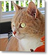 Beautiful Cat With Yellow Eyes Closeup Metal Print