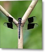 Beautiful Dragonfly Metal Print