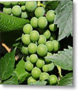 Beautiful Grapes Metal Print