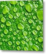 Beautiful Green Leaf With  Water Drops Metal Print