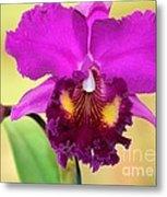 Beautiful Hot Pink Orchid Metal Print