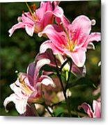 Beautiful Lilys Metal Print