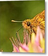 Beautiful Moth Metal Print