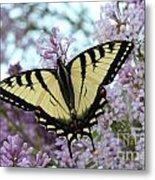 Beautiful Swallowtail Metal Print