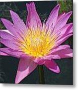 Beautiful Water Lily Metal Print