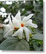 Beautiful White Flower With Orange Center Metal Print