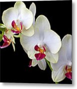 Beautiful White Orchids Metal Print