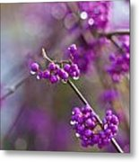 Beauty Berry Explosion Metal Print