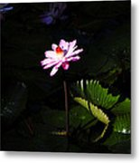 Beauty From The Depths Metal Print