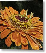 Beauty In Orange Petals Metal Print