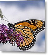 Beauty In The Sky Metal Print